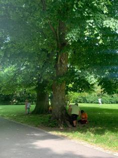 15. 6. 2021 ČaSP 1B - poznávání stromů a tvoření domečků pro lesní skřítky v přírodě